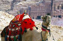 Camello en Petra