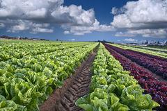 Campos cultivados en Israel